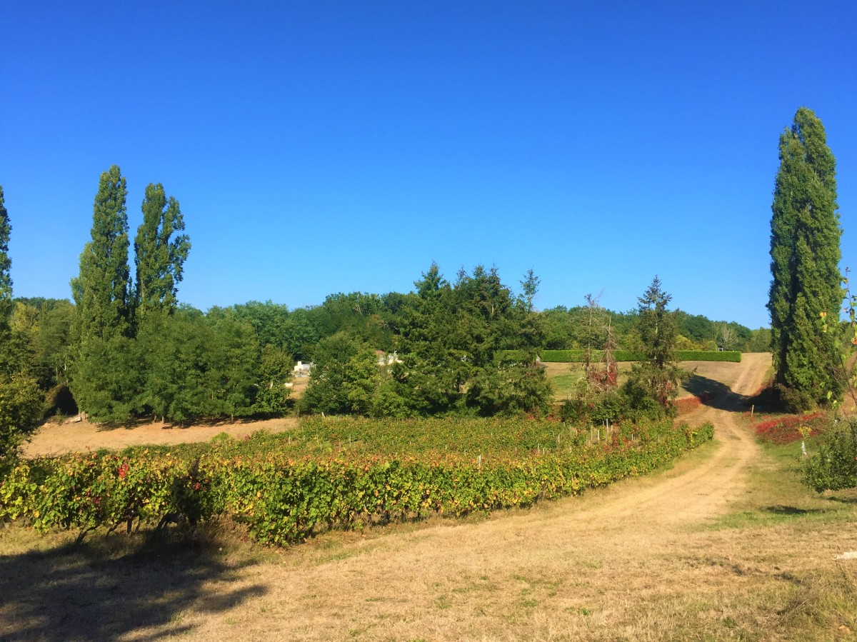 Organic Wine-making in Bordeaux, France